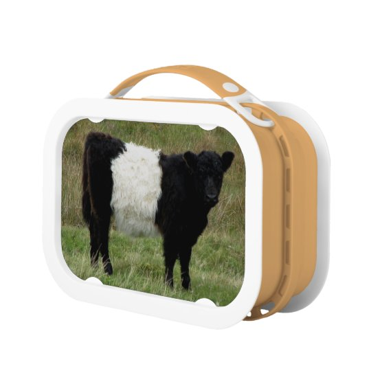 Dartmoor Belted Galloway Calf Lunch Box
