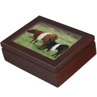 Dartmoor Belted Galloway Cow And Calf Keepsake Box