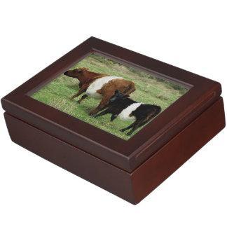 Dartmoor Belted Galloway Cow And Calf Keepsake Box