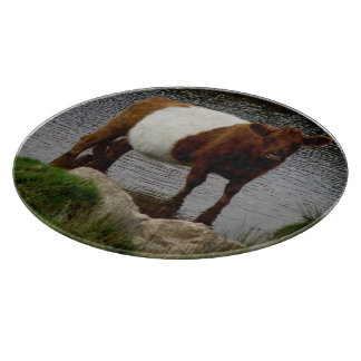 Dartmoor Belted Galloway Cow In River Cutting Board