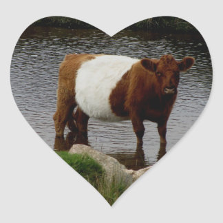 Dartmoor Belted Galloway Cow Standing In River Stickers