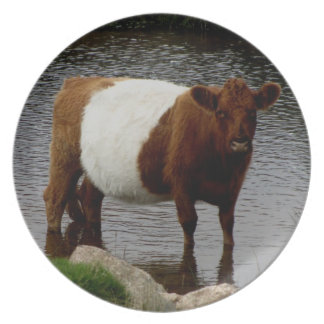 Dartmoor Belted Galloway Cow Standing River Plate