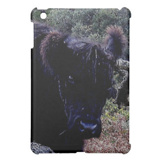 Dartmoor Black Galloway Cow Scratching On Tree Cover For The iPad Mini