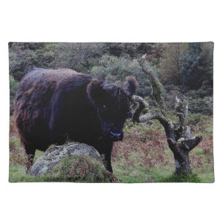Dartmoor Black Galloway Cow Scratching On Tree Placemat