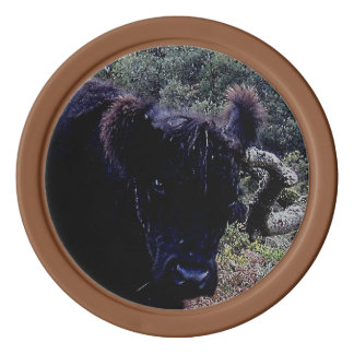 Dartmoor Black Galloway Cow Scratching On Tree Poker Chips