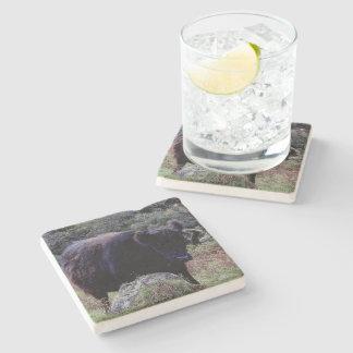 Dartmoor Black Galloway Cow Scratching On Tree Stone Coaster