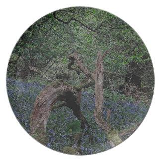 Dartmoor Drewsteignton Blue Bell Woods Plate