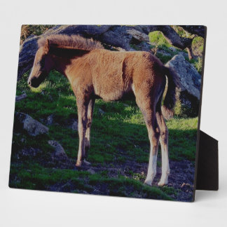 Dartmoor Foal Standing Near Fallen Tree Plaque
