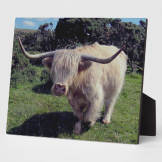 Dartmoor Highland Cow On The Move Plaque