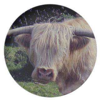 Dartmoor Highland Cow On The Move Plate