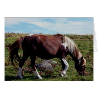 Dartmoor Hill Pony Grazing Near Leather Tor Card