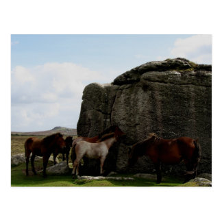 Dartmoor Ponies Sheltering Bone Hill Rocks .1. Postcard