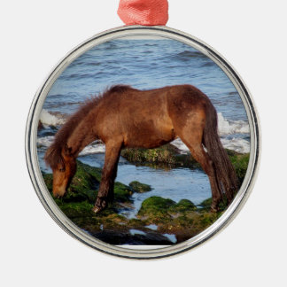 Dartmoor pony eating seaweed in remote south Devon Silver-Colored Round Decoration