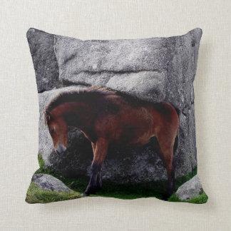 Dartmoor Pony Foal Itching Bone Hill Rocks Cushion
