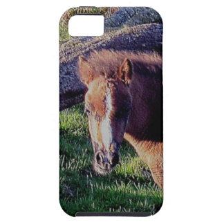 Dartmoor Pony Foal Near Fallen Tree Summer . 2 Tough iPhone 5 Case