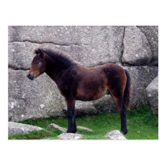 Dartmoor Pony Foal Sheltering Bone Hill Rocks Postcard