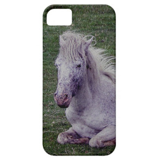 Dartmoor Pony Grey Mare Resting Barely There iPhone 5 Case