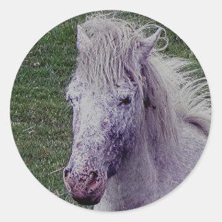 Dartmoor Pony Grey Mare Resting Round Stickers