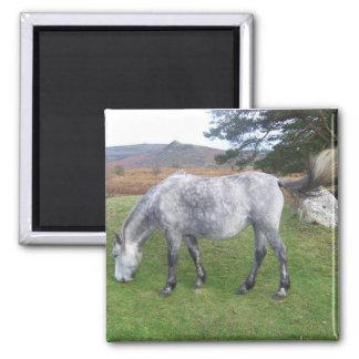 Dartmoor pony magnet