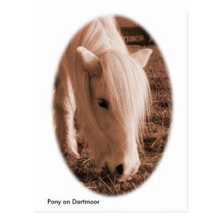 Dartmoor pony postcard