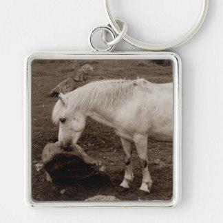 Dartmoor pony rubbing mouth on rock    ( sepia ) key ring