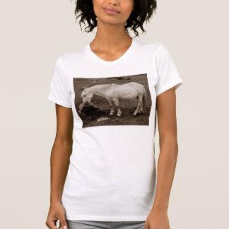 Dartmoor Pony Rubbing Mouth On Rock T-Shirt