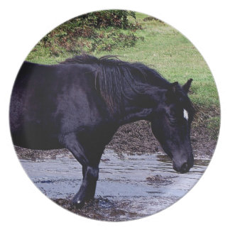 Dartmoor Pony Wadeing In Watering Hole Plate