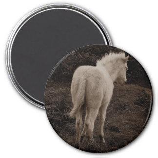 Dartmoor Pony White Foal  (sepia) 7.5 Cm Round Magnet
