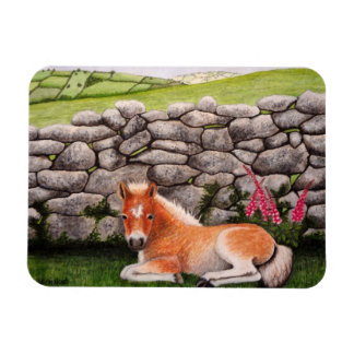 Dartmoor Pony with Foxglove Flowers Magnet