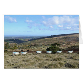Dartmoor Sheep Card
