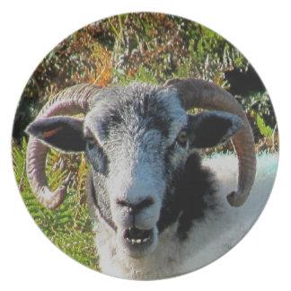 Dartmoor Sheep In Bracken Looking With Interest Plate