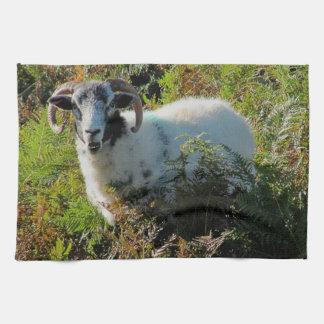 Dartmoor Sheep In Bracken Tea Towel