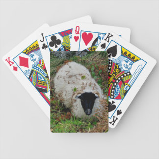 Dartmoor Sheep In Hideing Bicycle Playing Cards