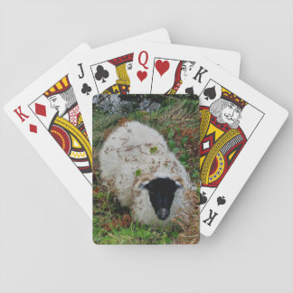 Dartmoor Sheep In Hiding Playing Cards