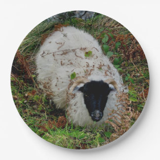 Dartmoor Sheepm In Hiding Paper Plate