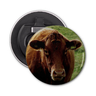 Dartmoor South Devon Cow Looking Bottle Opener