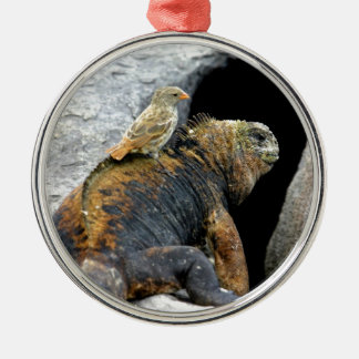 Darwin finch hitchhiking on marine iguana christmas ornament