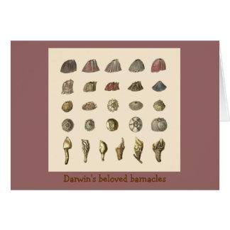 Darwin s beloved barnacles cards