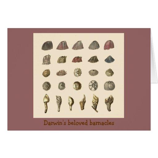 Darwin's beloved barnacles cards