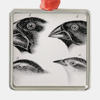 Darwin's bird observations christmas ornament