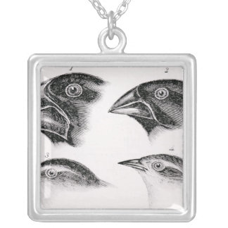 Darwin's bird observations silver plated necklace