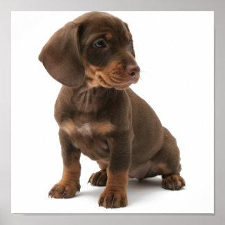 Dashchund Puppy Poster pRint