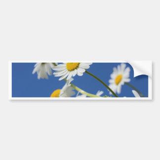 Dasy Flower Bumper Stickers