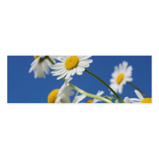 Dasy Flower Business Card Template