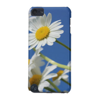 Dasy Flower iPod Touch (5th Generation) Cases