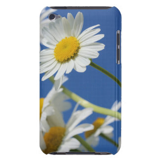 Dasy Flower iPod Touch Covers