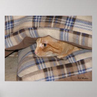 Dax Cat Pillow Sandwich Poster