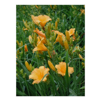 Day Lillies Print