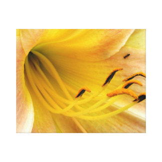 Day lily - canvas