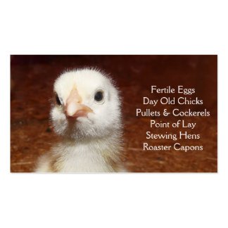 Day Old Chick - Layers or Broilers Farm Pack Of Standard Business Cards